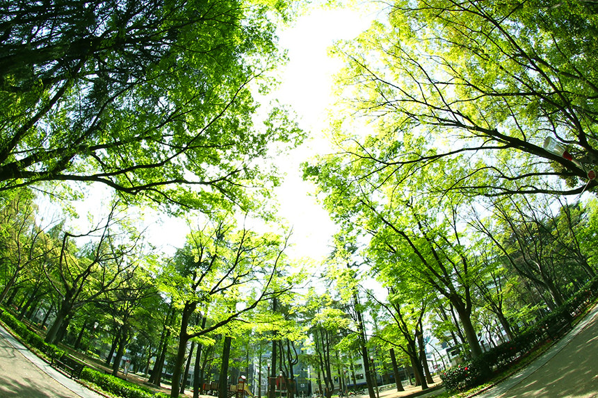 木のぬくもりを暮らしの中に生かそう