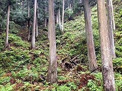 山林の様子